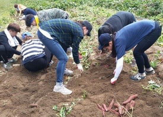 Chia sẻ của du học sinh Việt Nam về nghề làm vườn tại Hàn Quốc