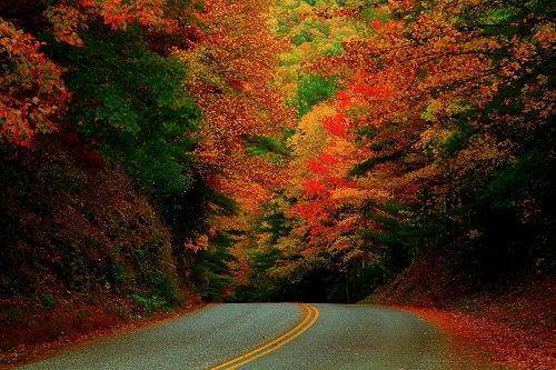 Rừng cây mùa thu của đất nước Canada