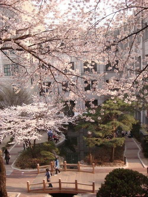 Mùa xuân tại trường Đại học nữ sinh Dongduk