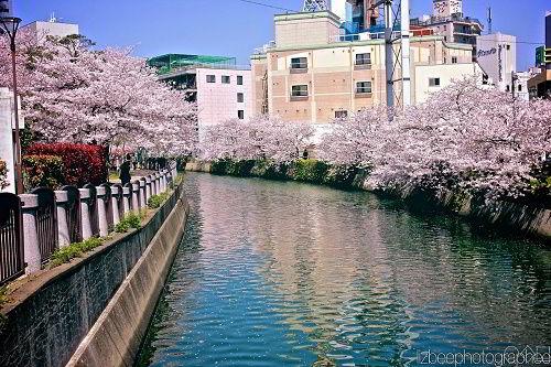 Kagoshima, thành phố nằm ở phía Nam Nhật Bản.