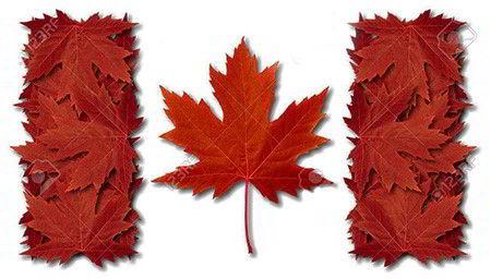 Lá phong – Biểu tượng đặc trưng của Canada