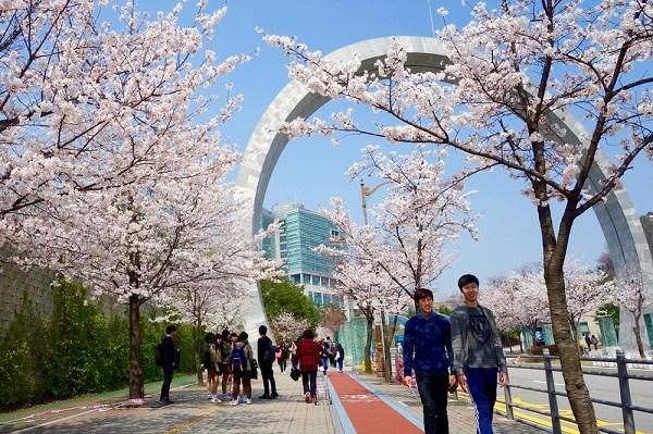 Một góc sân trường tuyệt đjep của trường Đại học Kangnam