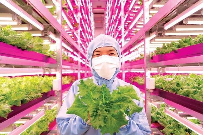 Chương trình đào tạo hấp dẫn khi du học Nhật Bản ngành nông nghiệp